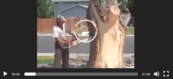 Невероятная резьба по дереву. Ватсап видео.
