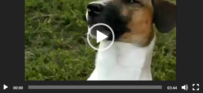 """Видео животные ватсап - Скажи: """"Мама""""."""