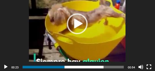 Как купаются животные. Ватсап видео.
