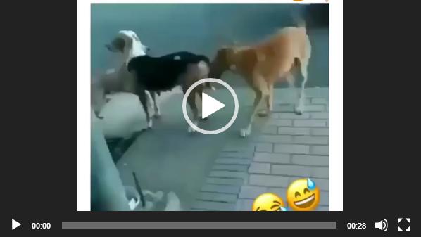 скачать бесплатные видео приколы про животных на телефон 2018 год