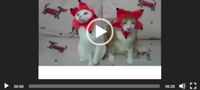 ватсап видео животные
