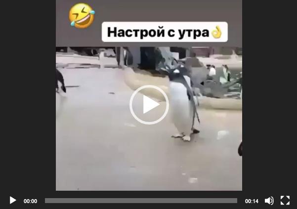 скачать видео настрой с утра с пингвином