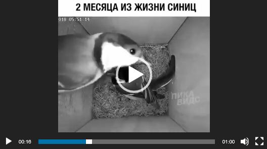 скачать видео про птиц бесплатно