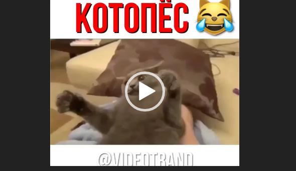 скачать приколы про кошек 2018