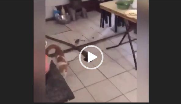 Мышка в доме хозяйка. Видео прикол для ватсап.