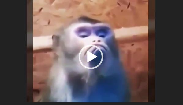 Я обиделась. Прикол с обезьяной.