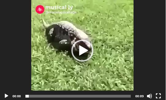 Эффект неожиданности. Видео приколы про животных.