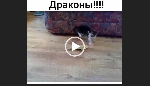 ватсап приколы видео животные
