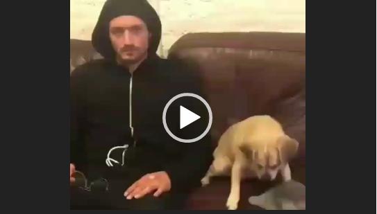 Гангста-собака. Приколы с животными.
