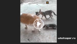 Видео приколы для ватсапа с животными 2018 год скачивай на whatsaper.ru