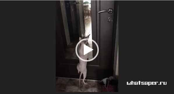 Кошки танцуют. Приколы про кошек 2018.