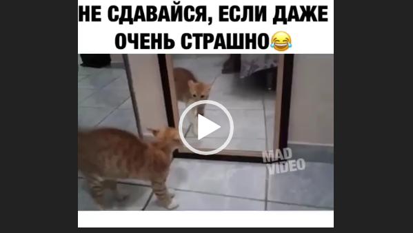 Не сдавайся, если очень страшно. Приколы с кошками.