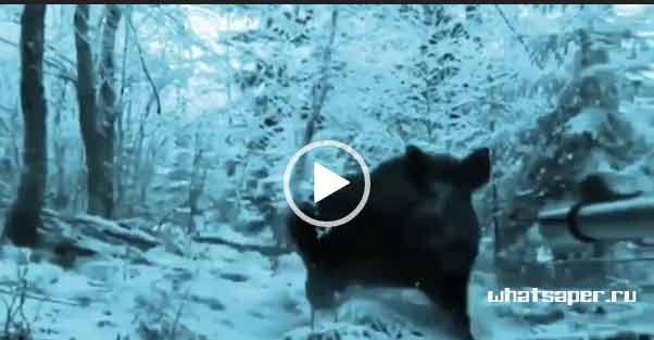 Невероятная охота на кабана. Скачать.