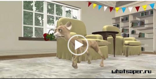 Видео поздравления от кошки. Скачать для ватсапа.