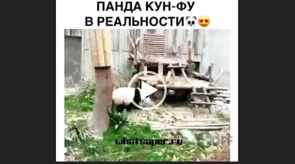 Кунфу Панда в реальности. Приколы про животных 2018.
