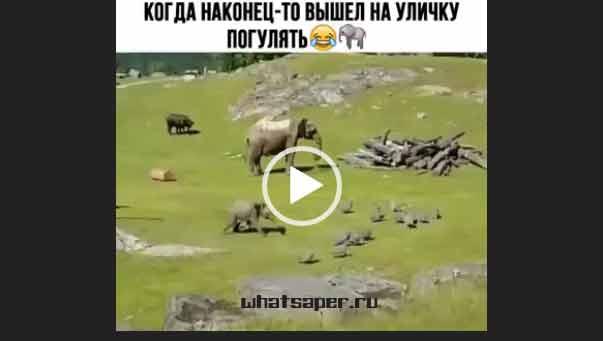 Маленький слоненок гуляет. Приколы про животных 2018.