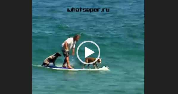 собаки приколы видео, видео приколы про собак, приколы собак видео смотреть, видео приколы собак бесплатно, прикол животный видео