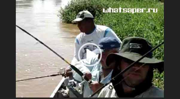 Приколы на рыбалке 2018. Скачать видео.