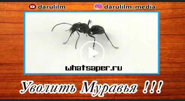 уволить муравья, уволить муравья видео, притча, видео притча, притчи, видео притчи, скачать, видеоролик, приколы скачать, приколы бесплатно