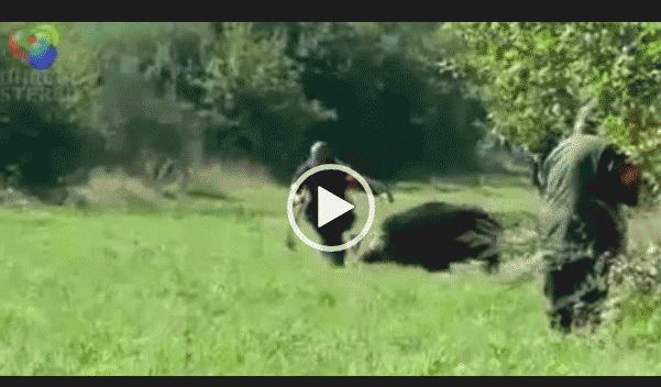 Чудом выжил. Случай супер охоты на кабана.
