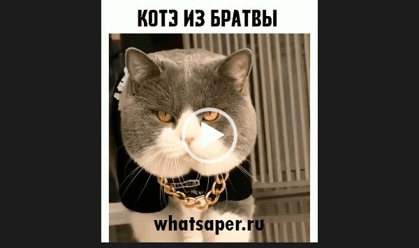 Кот из братвы.