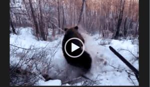 охота на медведя новинки