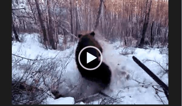 Супер охота на медведя и кабана 2019. Скачать.