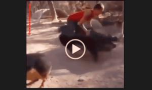 Видео приколы про животных, а точнее про свиней вы можете посмотреть и скачать  на whatsaper.ru