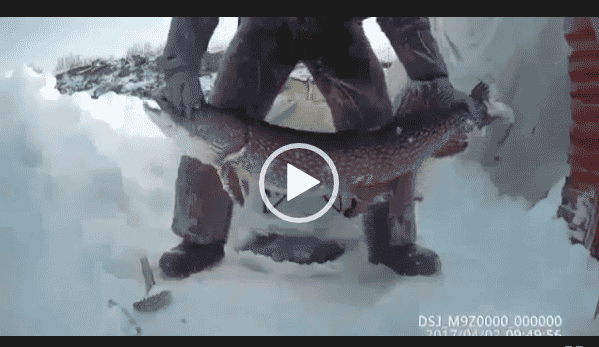 Невероятная зимняя рыбалка на щуку.