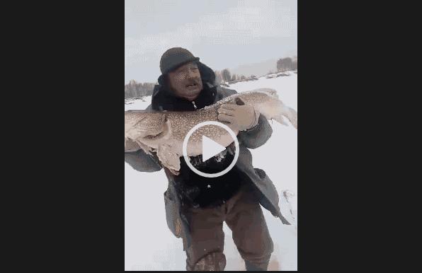 Видео на зимней рыбалке невероятно большая щука