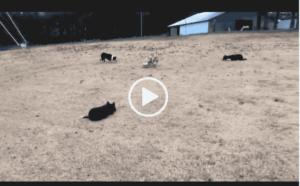 смотреть видео приколы про собак Самые умные животные это наверное собаки.