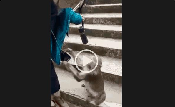 Гоп стоп от обезьяны. Приколы про животных.