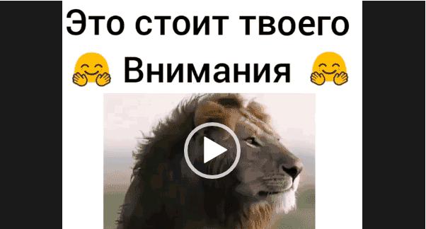 Видео -Даже если ты лев. Это стоит внимания.