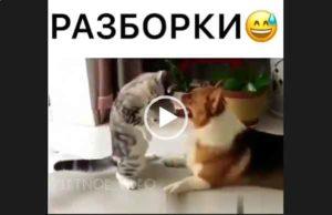 Прикол - разборки кошек с собаками. Скачать бесплатное видео.
