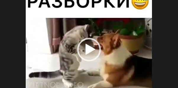 Разборка кошки и собаки. Приколы с животными.