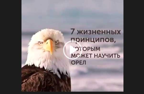 7 жизненных принципов, которым может научить орел.