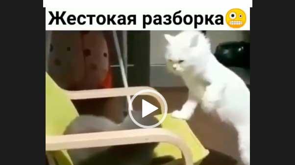 Дерутся кошки. Жесткая разборка. Приколы про кошек.