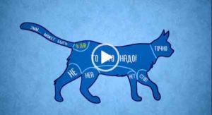 Как правильно гладить животных. интересное и познавательное видео.