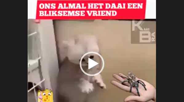 Реакция котенка на паука.