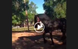 Видео прикол с лошадьми.