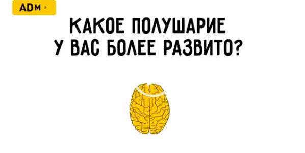 Какое полушарие мозга более развито. Тест.