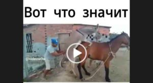 Держал свечку - смешной видео прикол про лошадей и людей.