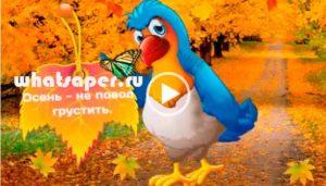 Осень пришла! Счастливой осени. Скачать видео бесплатно.