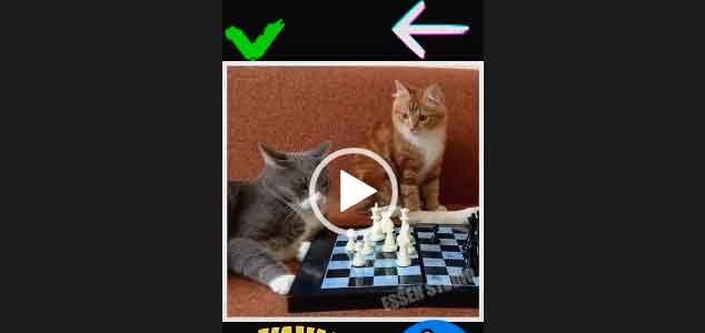 Кошки — Джентльмены удачи. Прикольный ролик.