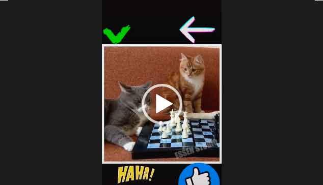 Кошки - Джентльмены удачи. Прикольный ролик.