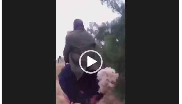 Оседлал страуса. Прокатнулся на страусе. интересное видео про людей и животных.