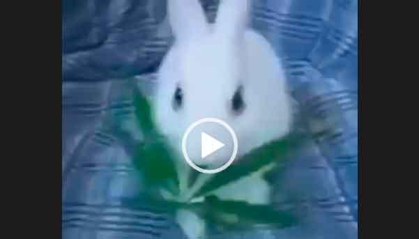 Бешенный заяц поел не той травы. Смешной и ржачный видео прикол про зайца.