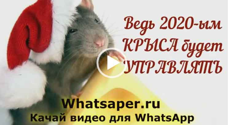 С наступающим 2020 годом. Скачать видео пожелания, открытки, поздравления. 2020 год - Год крысы.
