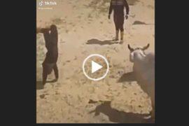 Настоящий ковбой. Прикольное видео.