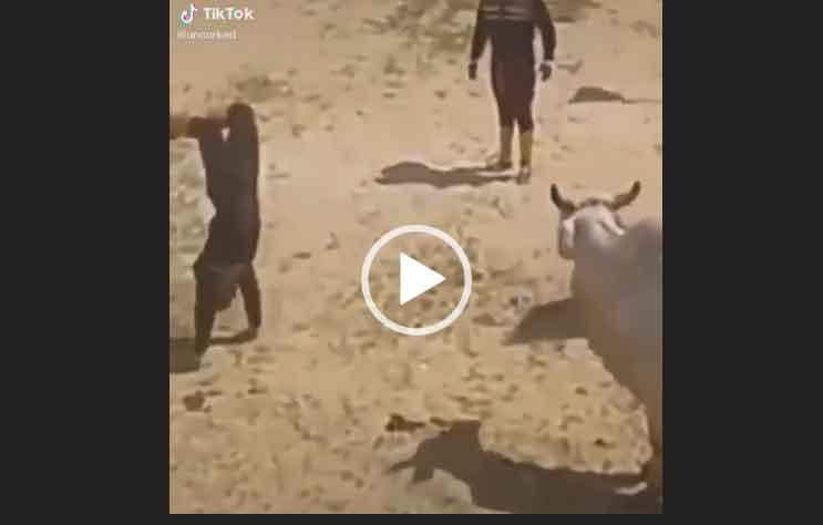 Настоящий ковбой. Самое прикольное видео.